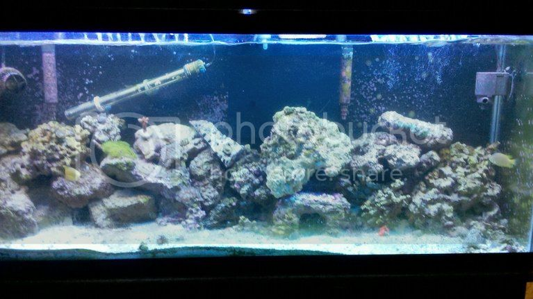 photobucket 669 1336362073521 - 55 Gallon Reef Tank Complete Setup